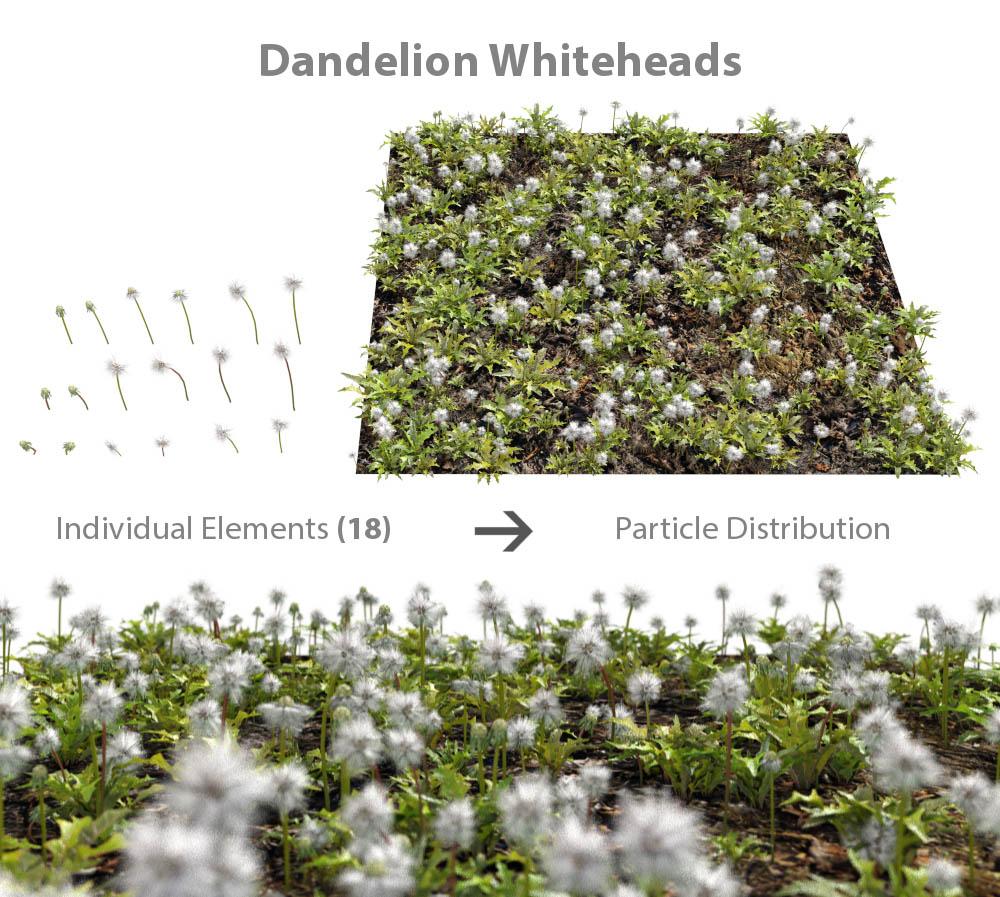 weed_dandelion_whiteheads